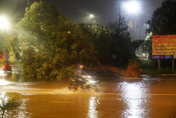 Gió giật khiến cây xanh tại TP Quy Nhơn bật gốc. Ảnh: NGỌC OAI