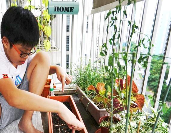 Valen Ng. bên vườn rau trên ban công của mình