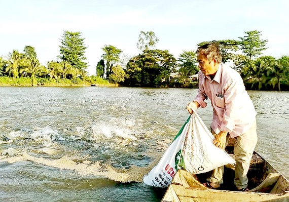 Thức ăn chăn nuôi tăng giá tạo thêm gánh nặng cho người nuôi cá tra ở An Giang