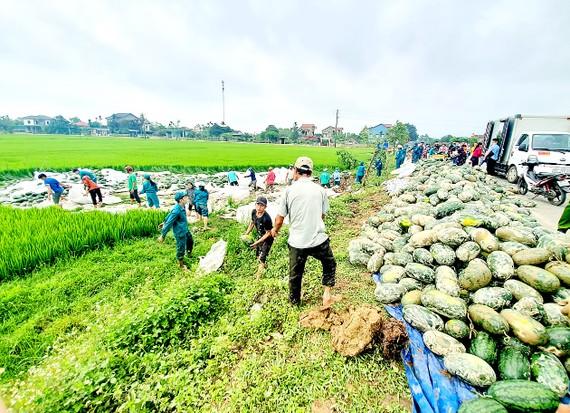 Vụ tai nạn khiến toàn bộ dưa hấu trên xe đổ tràn xuống ruộng lúa