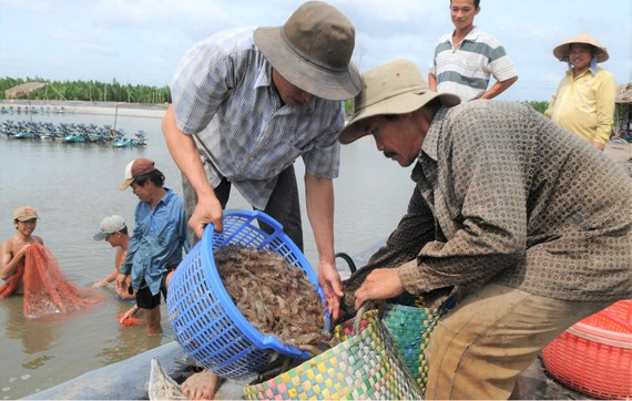 Thủy sản là mặt hàng có lợi thế xuất khẩu sang thị trường thực phẩm Halal. Ảnh: CAO THĂNG
