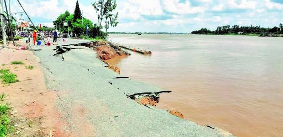 Sạt lở bờ sông ở An Giang ngày càng lan rộng. Ảnh: HUỲNH LỢI