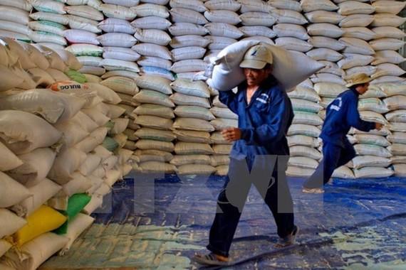 Egypt to import 1 million tonnes of Vietnamese rice
