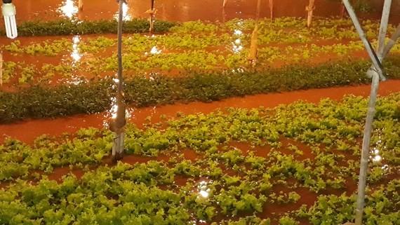 Heavy rain floods Dalat City  
