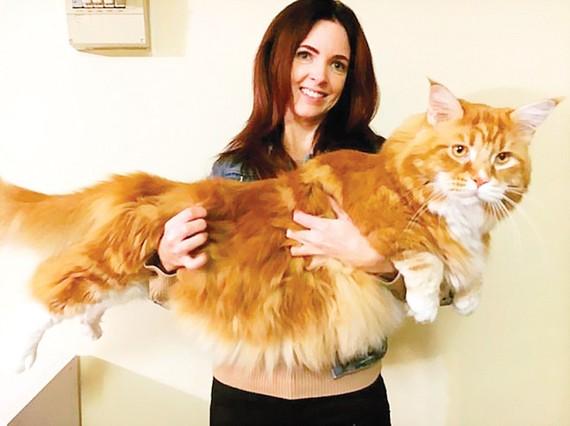 Chú mèo khổng lồ