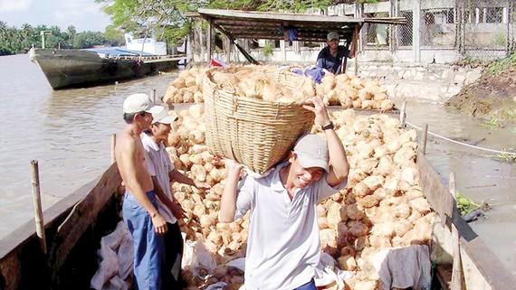 Thu mua dừa khô ở Bến Tre
