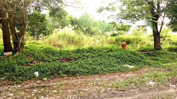 Đến nay, dự án của Công ty Tân An Huy tại xã Phước Kiển vẫn chưa xong hạ tầng kỹ thuật