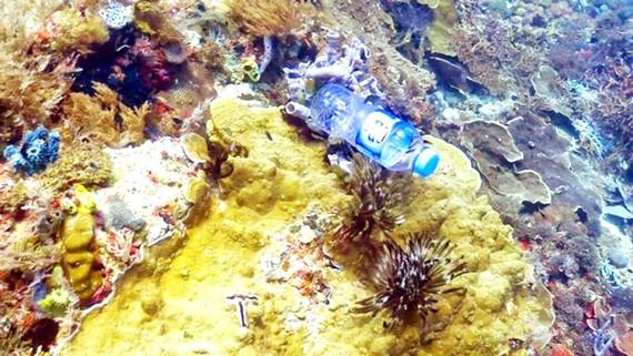 Rác nhựa đe dọa san hô
