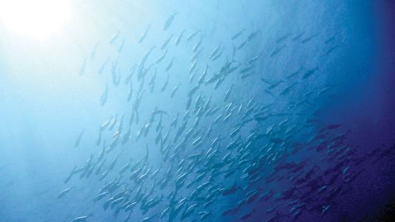 Biến đổi khí hậu ảnh hưởng ngành thủy sản Nam Mỹ