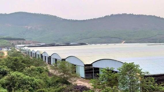 Hệ thống chuồng trại bỏ không tại Dự án chăn nuôi bò của Công ty Bình Hà