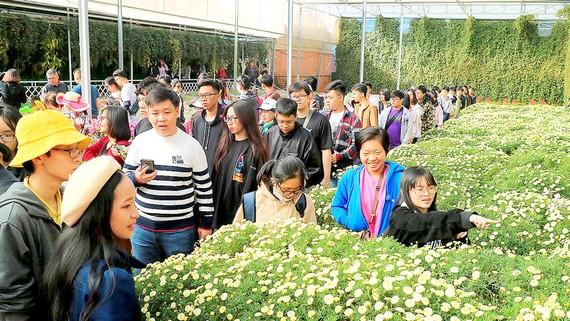 Du khách tham quan không gian hoa Đà Lạt trong ngày 20-12