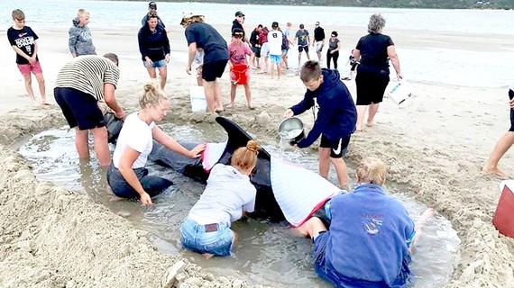 Cứu cá voi ở New Zealand