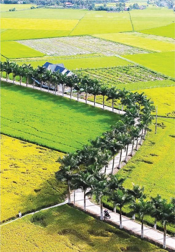 Long An xây dựng nông thôn mới với khí thế mới