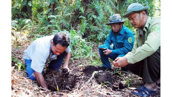 Kiểm tra độ ẩm của rừng tại Vườn quốc gia U Minh Hạ (Cà Mau). Ảnh: TẤN THÁI