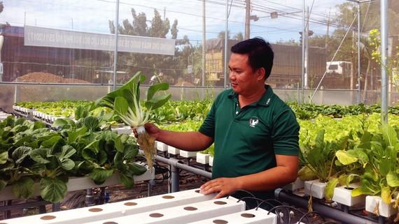 Trồng rau thủy canh theo mô hình nông nghiệp công nghệ cao tại xã Chà Là (huyện Dương Minh Châu)