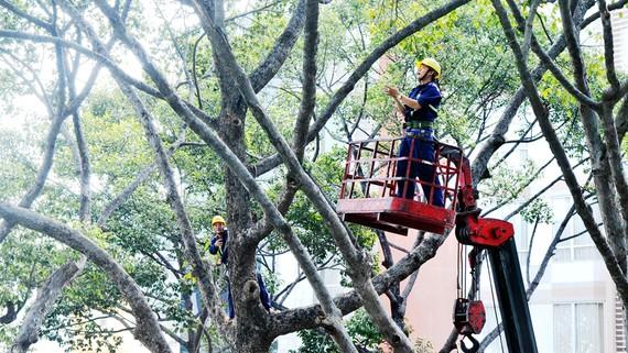 Cây xanh cần được quan tâm chăm sóc để đảm bảo an toàn giao thông trong mùa mưa. Ảnh: CAO THĂNG