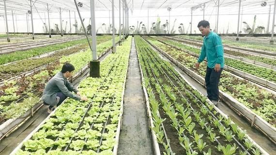 TPHCM đã có nhiều mô hình sản xuất rau công nghệ cao