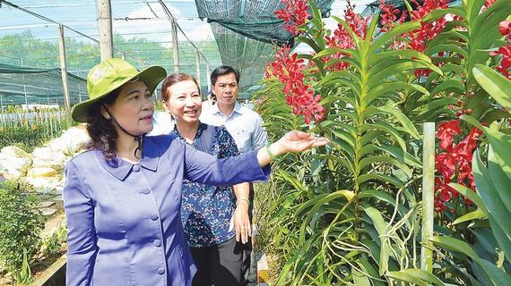 Phó Bí thư Thành ủy, Chủ tịch HĐND TPHCM Nguyễn Thị Lệ khảo sát mô hình trồng lan tại Vườn lan Huyền Thoại, huyện Củ Chi, TPHCM. Ảnh: VIỆT DŨNG