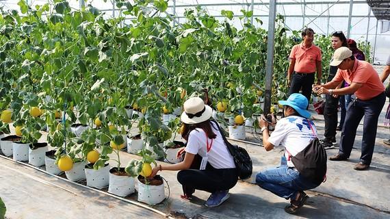 Đồng Tháp phát triển nông nghiệp công nghệ cao, gắn với du lịch