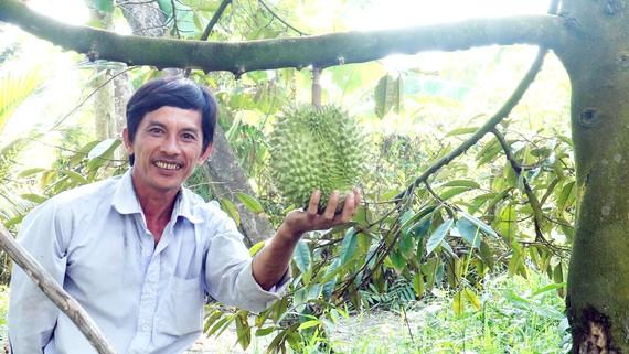 Nông dân Tiền Giang phấn khởi khi sầu riêng nghịch mùa được giá cao