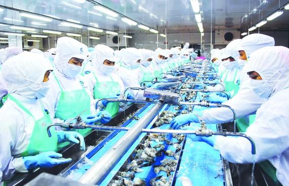 Đồng bằng sông Cửu Long: Điểm sáng xuất khẩu tôm