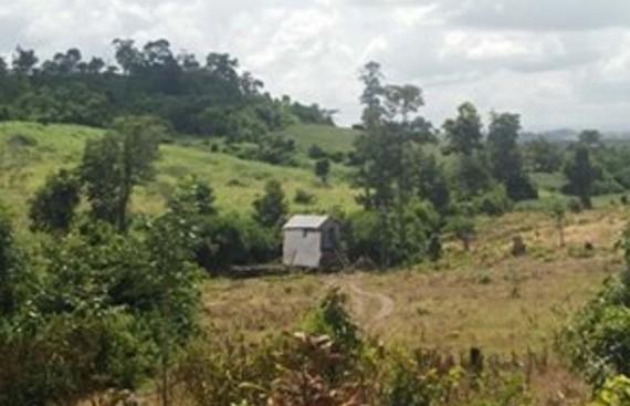 Rừng ở huyện Ea Súp bị tàn phá nặng