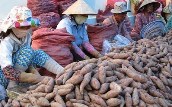 TPHCM sắp cấm nông sản chưa sơ chế nhập chợ