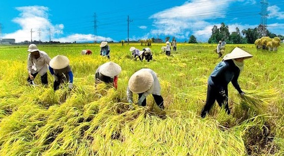 Bảo vệ vựa lúa miền Tây