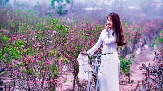 Thiếu nữ trong trang phục áo dài giữa vườn đào Nhật Tân.