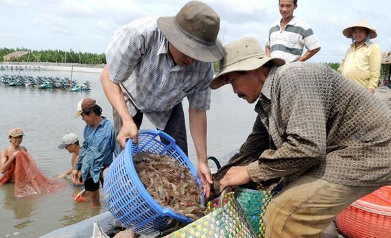 Thủy sản là mặt hàng có lợi thế xuất khẩu sang thị trường thực phẩm Halal  Ảnh:  CAO THĂNG