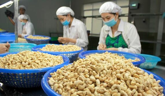 Hiện nay năng lực chế biến hạt điều của Việt Nam được canh tân kỹ thuật, tiến bộ nhanh.