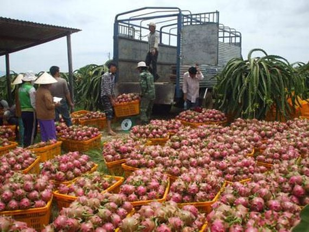 7 tháng xuất siêu nông sản hơn 4 tỉ USD