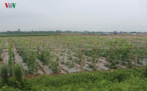 Quá trình tích tụ ruộng đất nông nghiệp vẫn gặp nhiều khó khăn