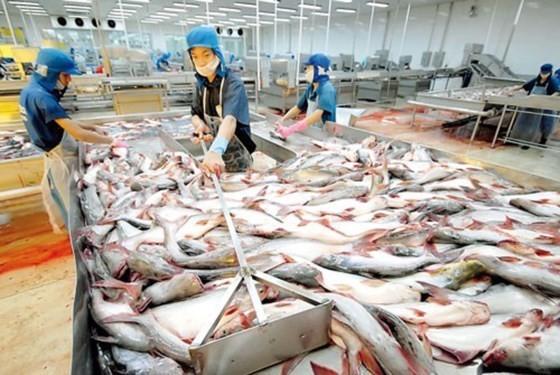 Đưa cá tra ra Hà Nội