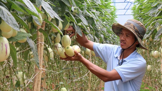 27.000 nông hộ có doanh thu từ 1 tỉ đồng/năm trở lên
