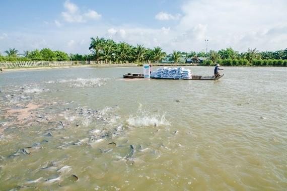 Đến 2020, giá trị xuất khẩu thủy sản đạt 8-9 tỷ USD