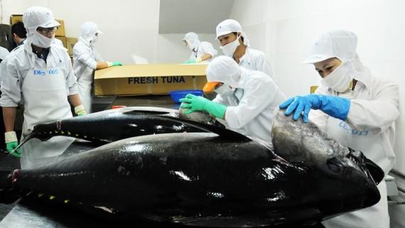 VASEP lo xuất khẩu cá ngừ bị ảnh hưởng vì 'thẻ vàng'