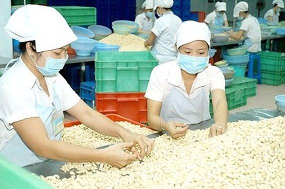 Kim ngạch xuất khẩu điều nhân của Việt Nam đứng số một thế giới. Ảnh: KIM NGÂN
