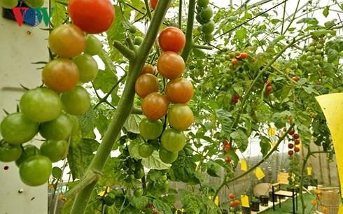 Hàng loạt ưu đãi mới cho doanh nghiệp đầu tư vào nông nghiệp