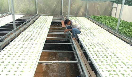 Mô hình nhà màng nuôi tôm kết hợp trồng rau phù hợp với nông nghiệp đô thị