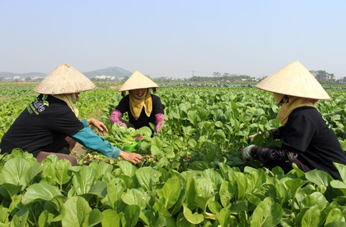 Nông nghiệp hướng tới kim ngạch xuất khẩu 40 tỷ USD