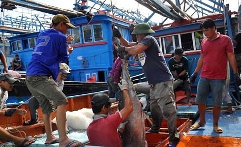 """Vì sao EU chưa gỡ """"thẻ vàng"""" cho xuất khẩu thủy sản Việt Nam?"""