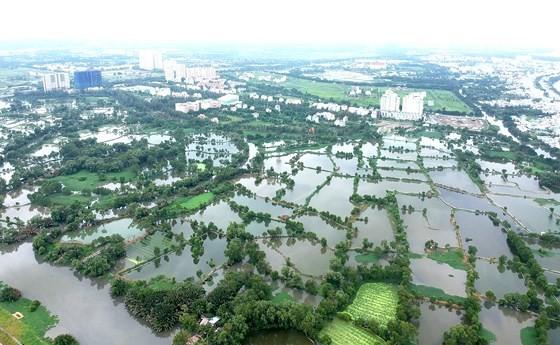 Đất nông nghiệp tại xã Bình Hưng, huyện Bình Chánh. Ảnh: CAO THĂNG