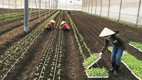 Đầu tư sản xuất NNHC tại một trang trại