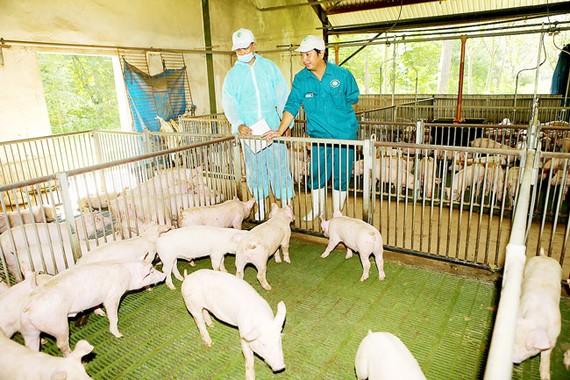 Hiện nay, ngành chăn nuôi Việt Nam theo quy mô, liên kết chuỗi giá trị rất ít, đây sẽ là thách thức khi tham gia CPTPP