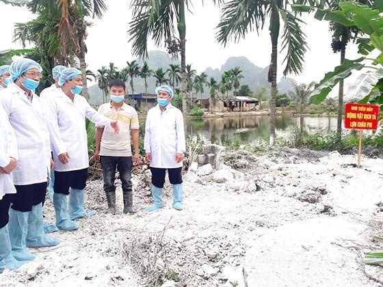 Tiêu hủy heo mắc bệnh tại xã Liên Khê, huyện Thủy Nguyên (Hải Phòng) Ảnh: Văn Phúc