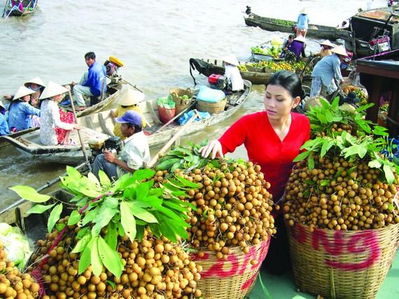 Hiện Việt Nam mới có 8 loại trái cây nhập khẩu chính ngạch vào Trung Quốc, trong đó có nhãn.