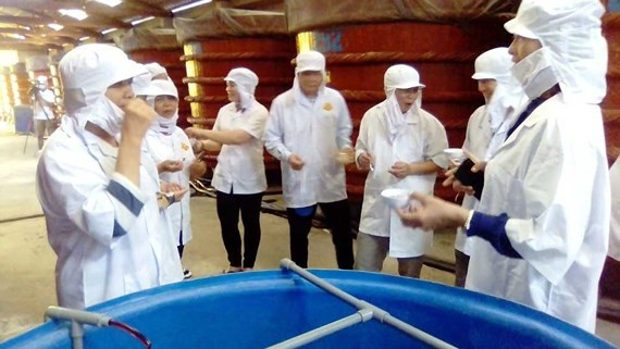 Khảo sát về sản xuất nước mắm ở đảo Phú Quốc