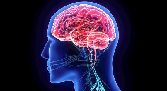 Tăng trưởng tế bào thần kinh mới giúp giảm ảnh hưởng bệnh Alzheimer