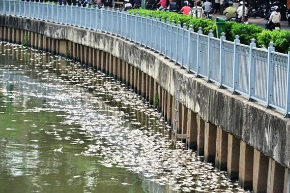 Giảm đàn cá trên kênh Nhiêu Lộc – Thị Nghè
